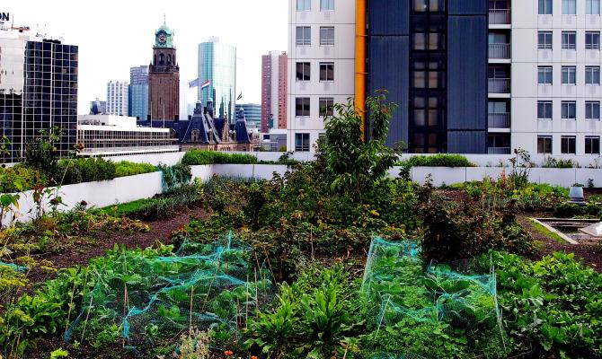 Rotterdam e l'agricoltura urbana