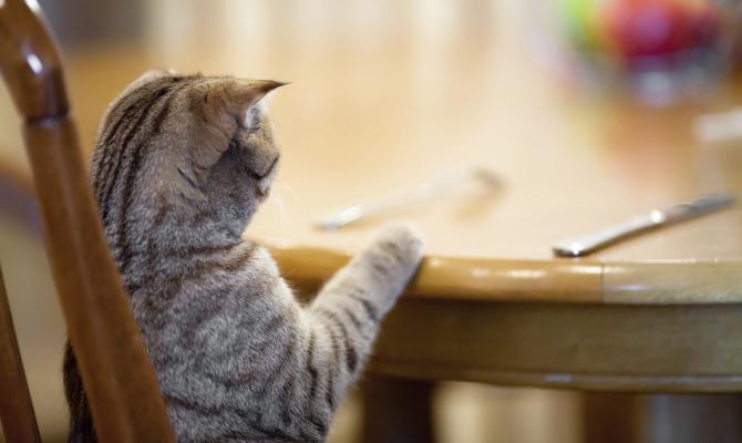 Romeow Cat Bistrot, aggiungi un gatto a tavola
