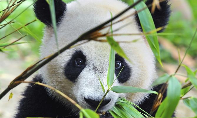 Natale solidale con le iniziative WWF