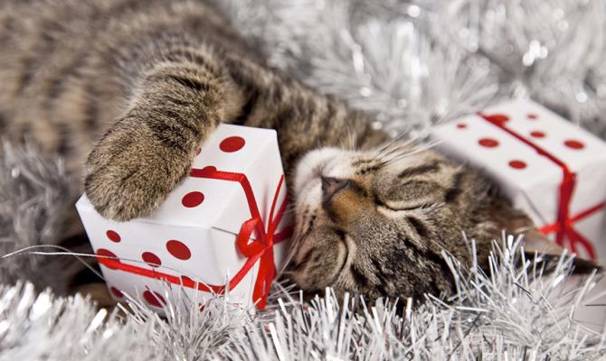 Natale a quattro zampe: idee regalo per gli amici pelosi