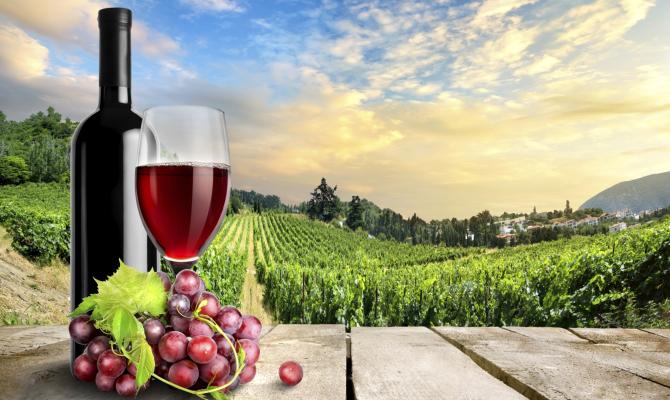VinoSafari: esplorando la terra dei vini