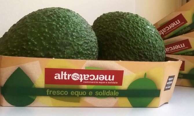 Arriva l'Avocado bio e solidale