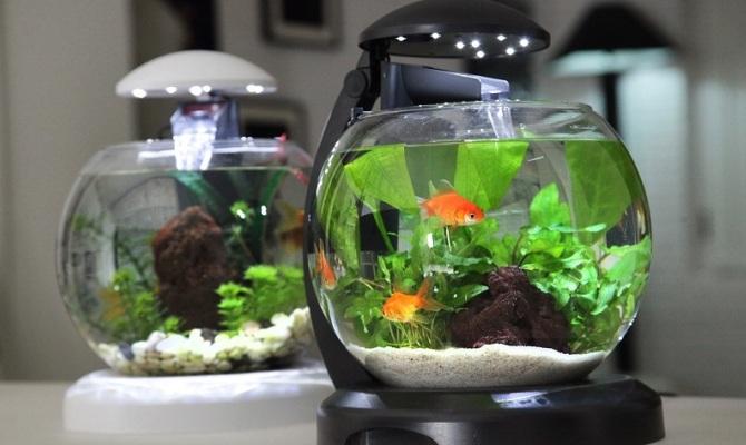Acquariofilia quanto ne sai for Quanto vivono i pesci rossi