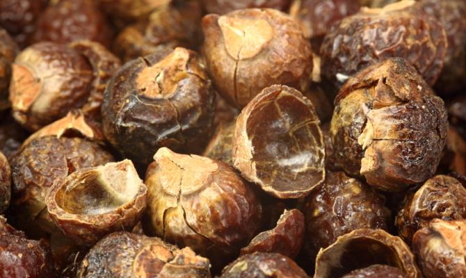 Un frutto per il bucato: le noci del sapone
