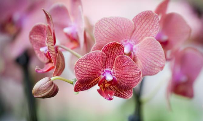 Prendersi cura di un orchidea missione possibile www for Cura orchidee in vaso