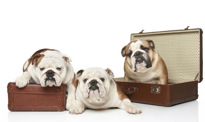 Cani in valigia