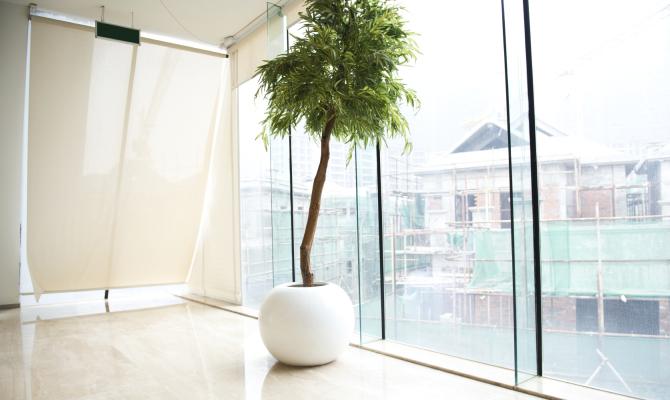 Spazi verdi in casa con le piante indoor