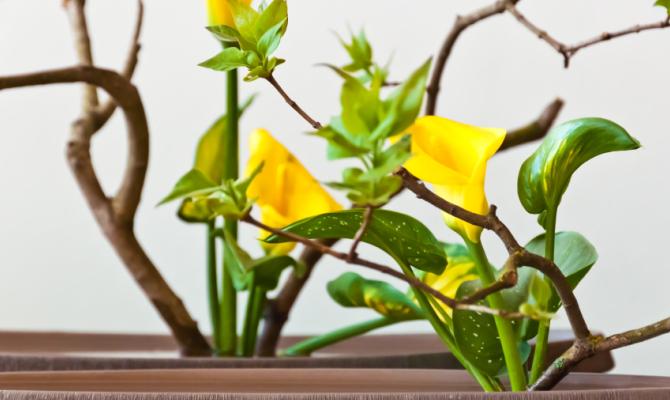 Arte dei fiori giapponese