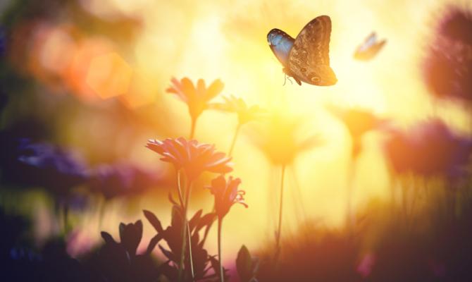 Come attirare le farfalle nel proprio giardino