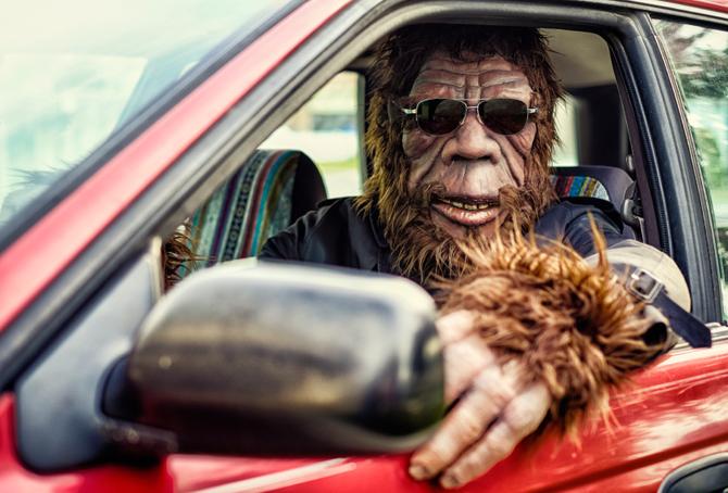 Gorilla alla guida