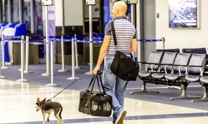 Cani viaggio