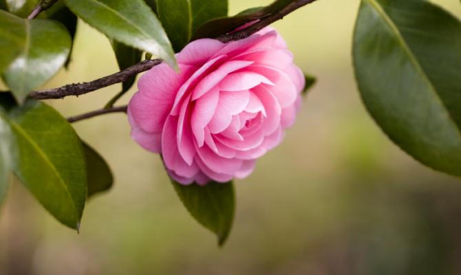 Piante floreali che resistono al freddo