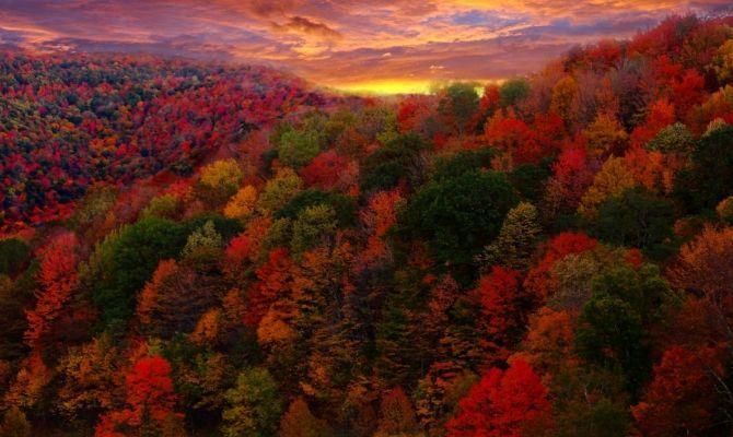 foliage, autunno, foglie, boschi