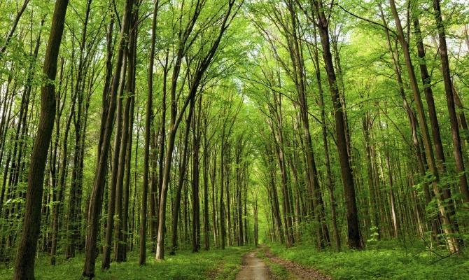 Foresta terapia: la medicina è naturale