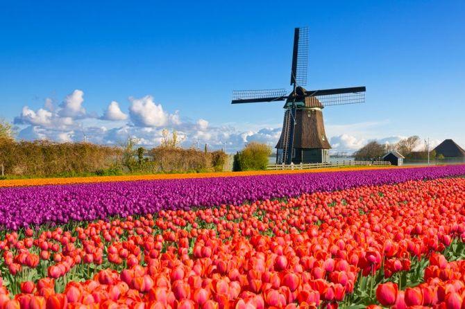 20 Olanda