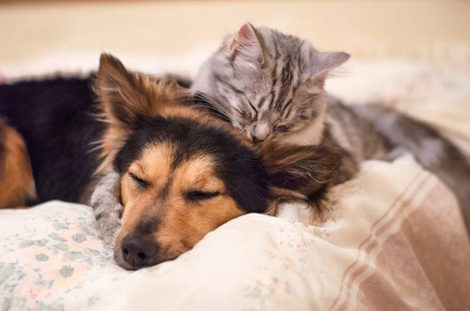 Cane o gatto?