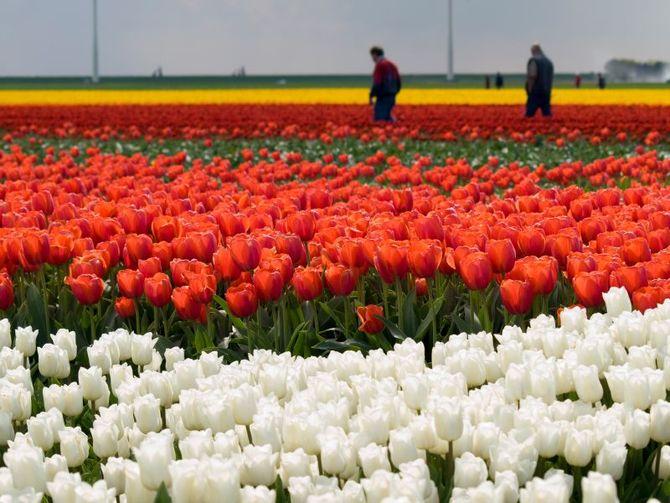 14 Olanda
