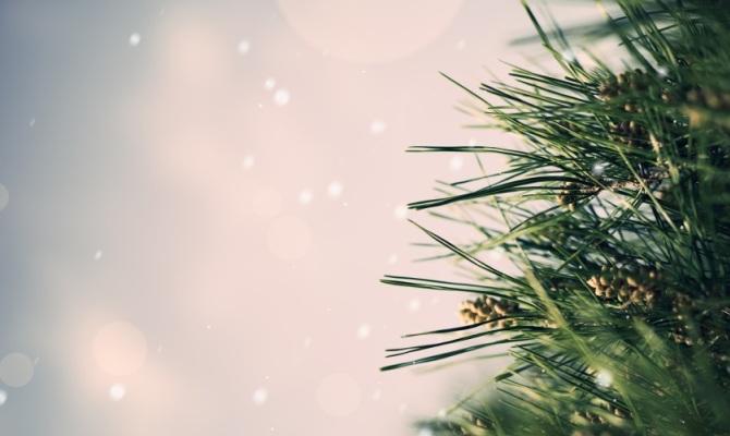 La seconda vita di un albero di Natale