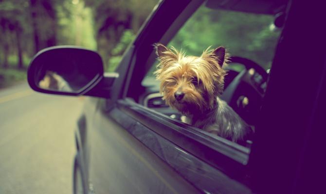 In viaggio con il proprio animale