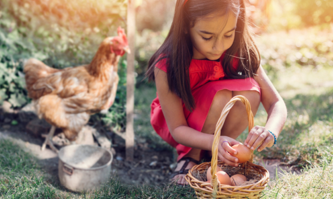 Bambina con gallina e uova