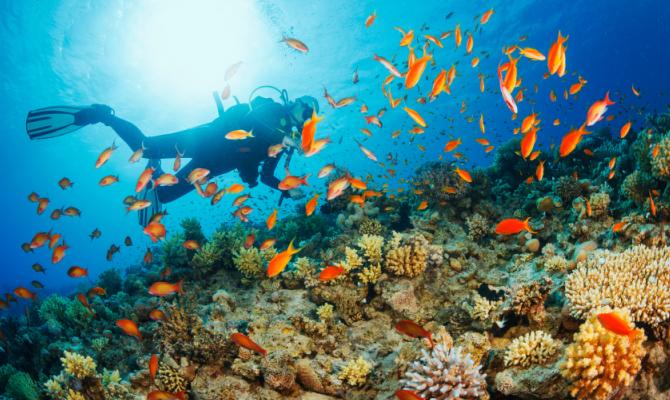 Per amore del mondo sott'acqua