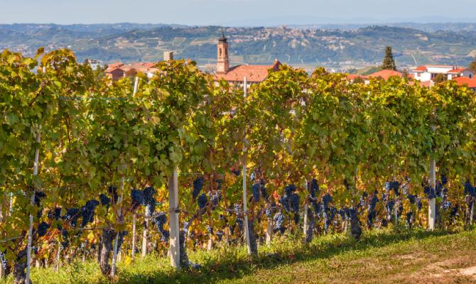 Wine Trekking: escursioni tra i filari