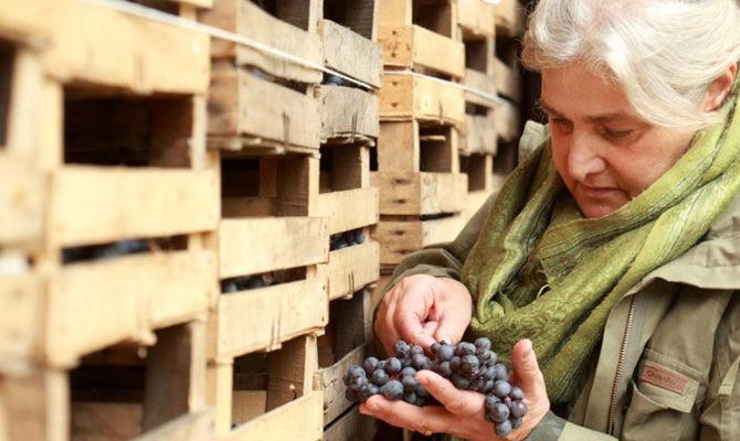 Marinella Camerani, signora del vino