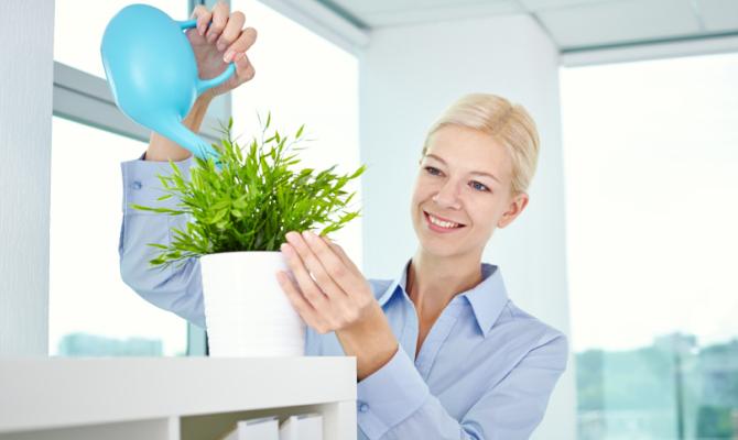 Le piante da tenere in ufficio