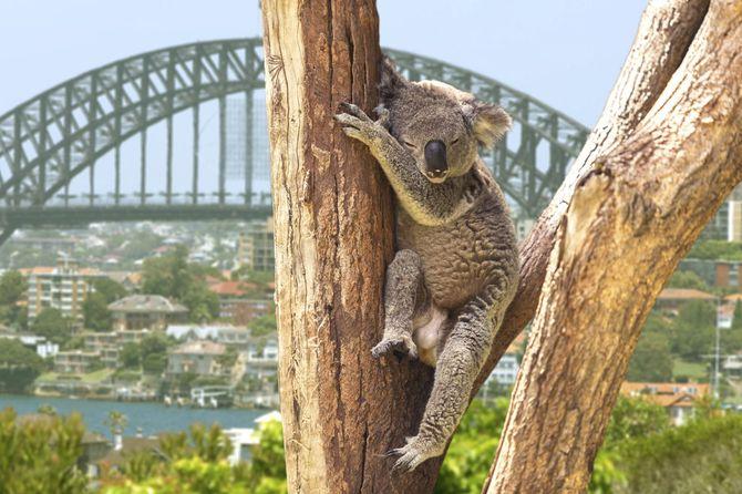 5 Australia