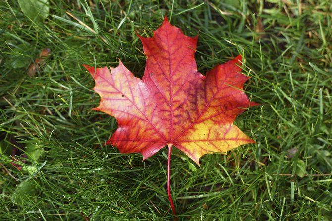 7 Canada