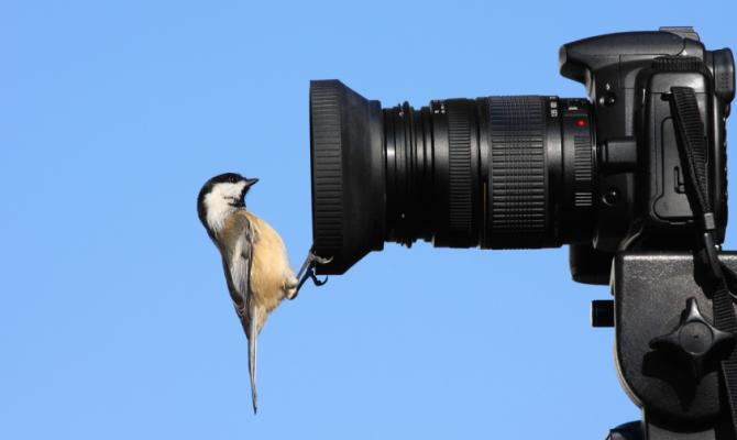 Birdwatching, passione che avvicina alla natura