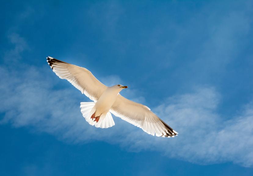 Richard Bach continua a volare sulle ali del gabbiano