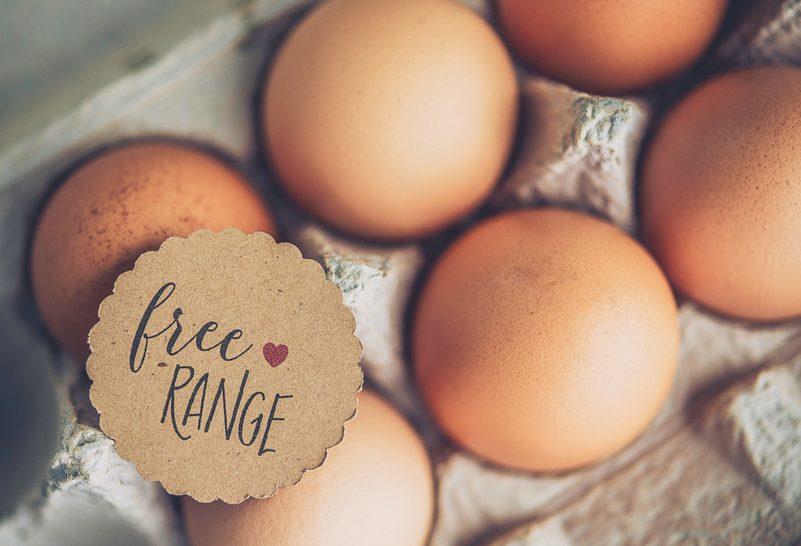 Conservare le uova: cosa dice la scienza