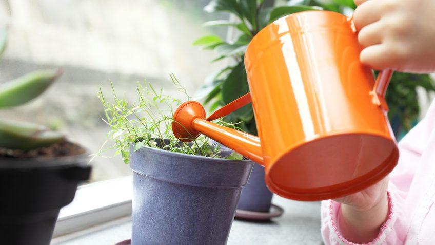 Come salvaguardare le piante in nostra assenza