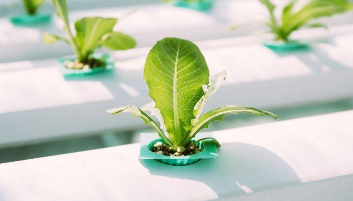 Coltivare in casa senza terra