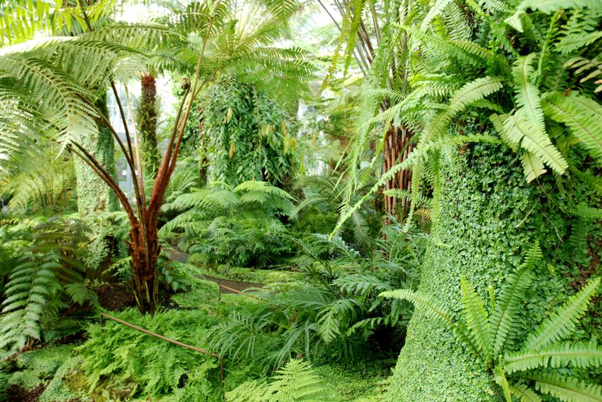 Piante della giungla verde