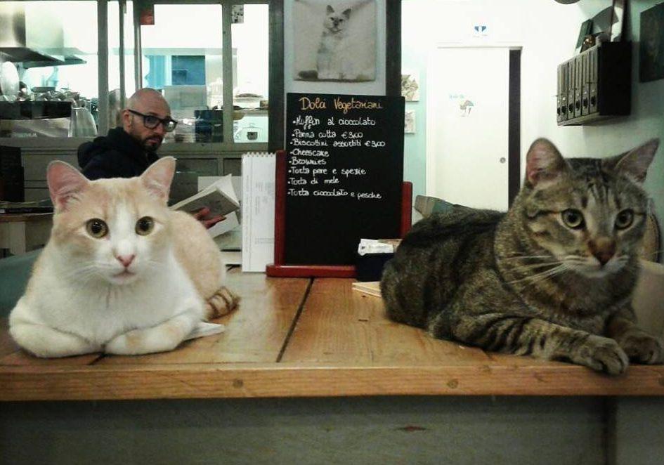 15 imperdibili Cat Café in giro per l'Europa