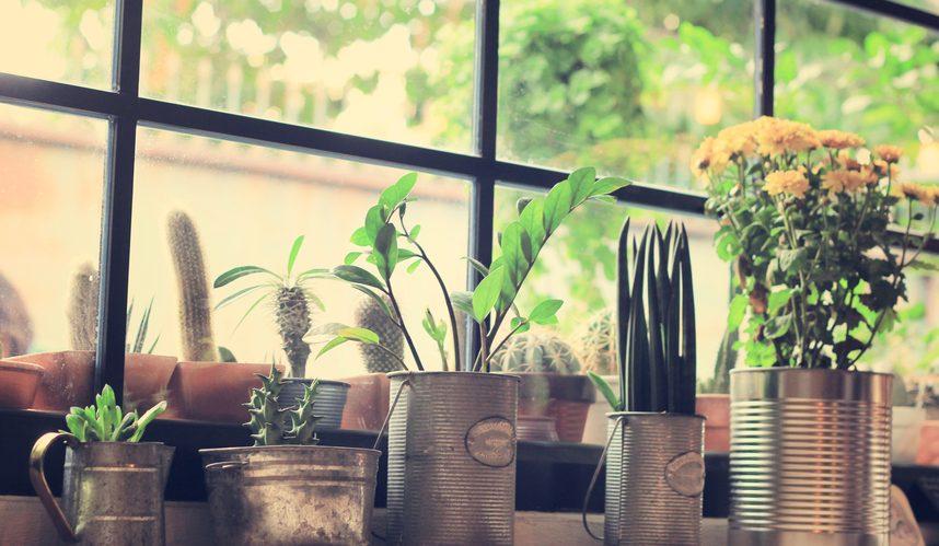 Arriva il freddo: come riportare le piante in casa