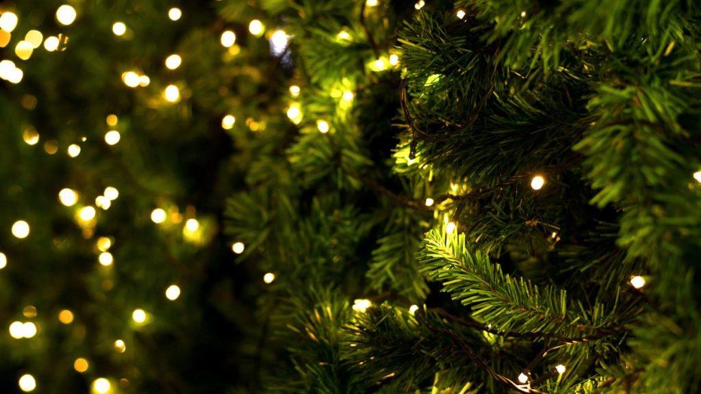 Abete natalizio: come garantirgli lunga vita