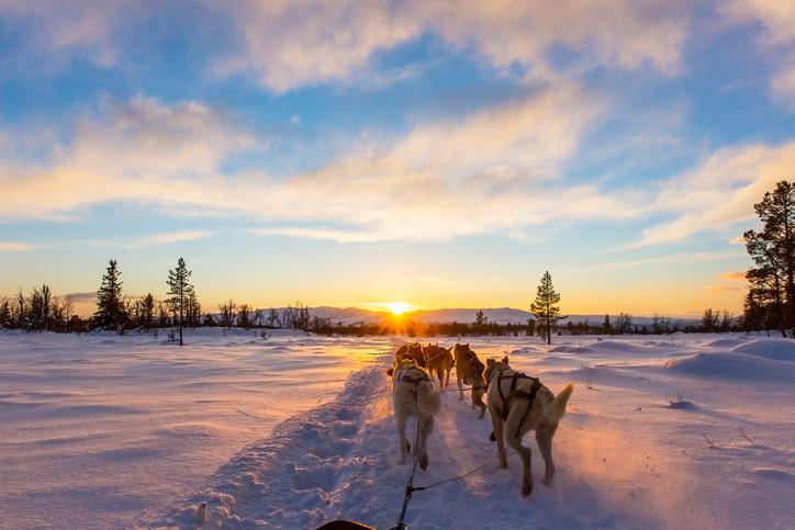 Panorama con slitta trainata da cani