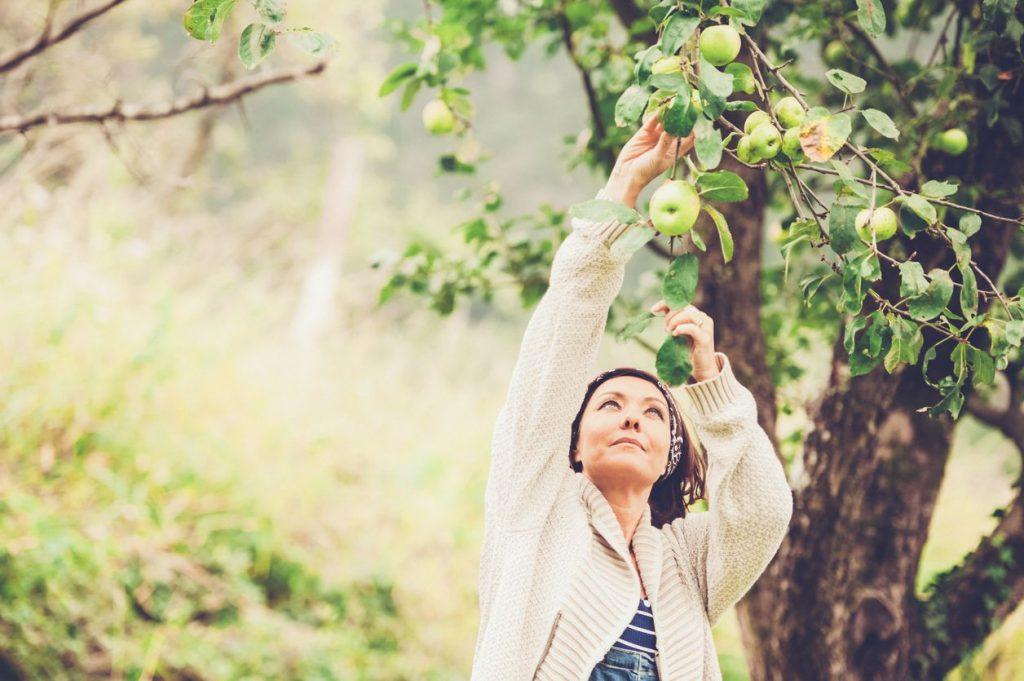 Raccogliere la frutta