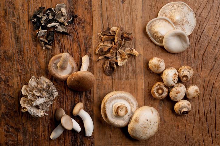 Alcuni funghi edibili