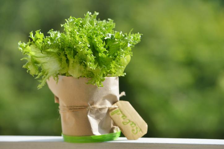 Coltivare la lattuga: 3 modi di farlo in casa
