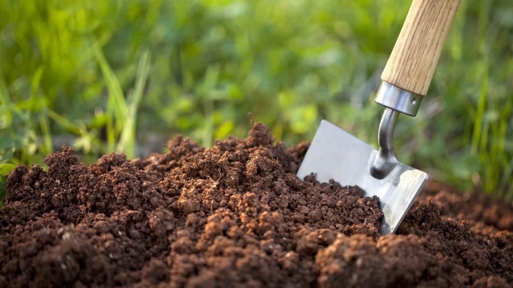 Fondi del caffè come fertilizzante per le piante