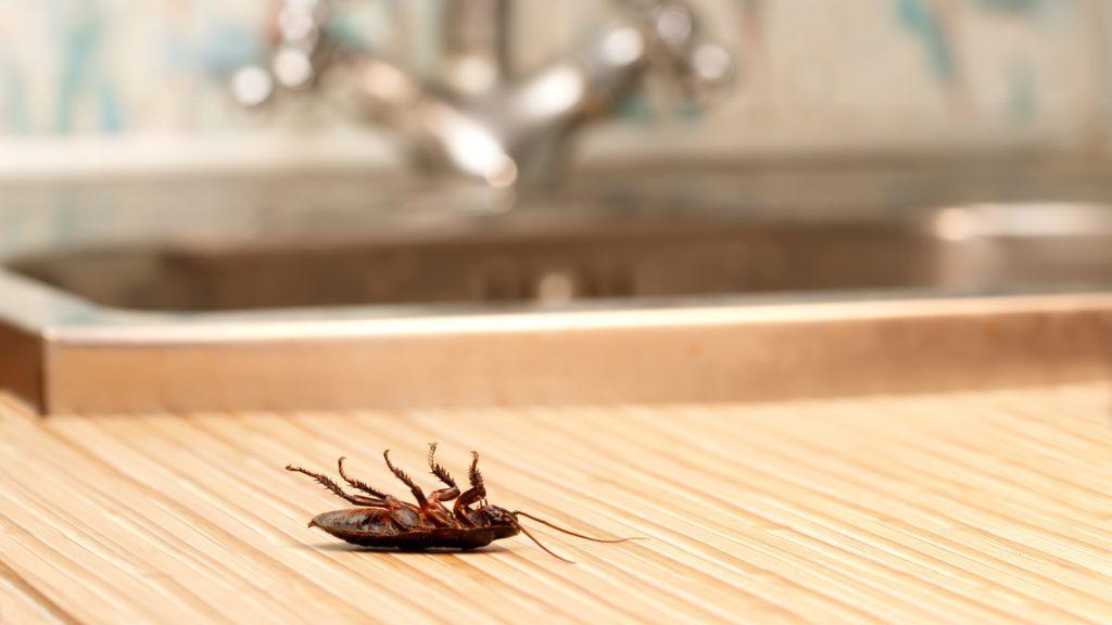 Infestanti ed insetti che paura! Le fobie di primavera