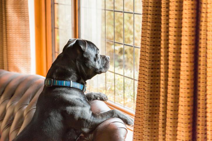 Cattive abitudini in vacanza: cane solo per ore