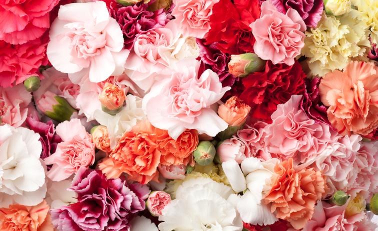 Flower Experience: l'arte floreale in Umbria