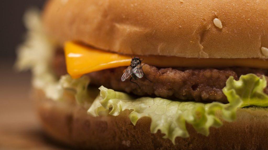 Mosche sul cibo: come comportarsi in questi casi