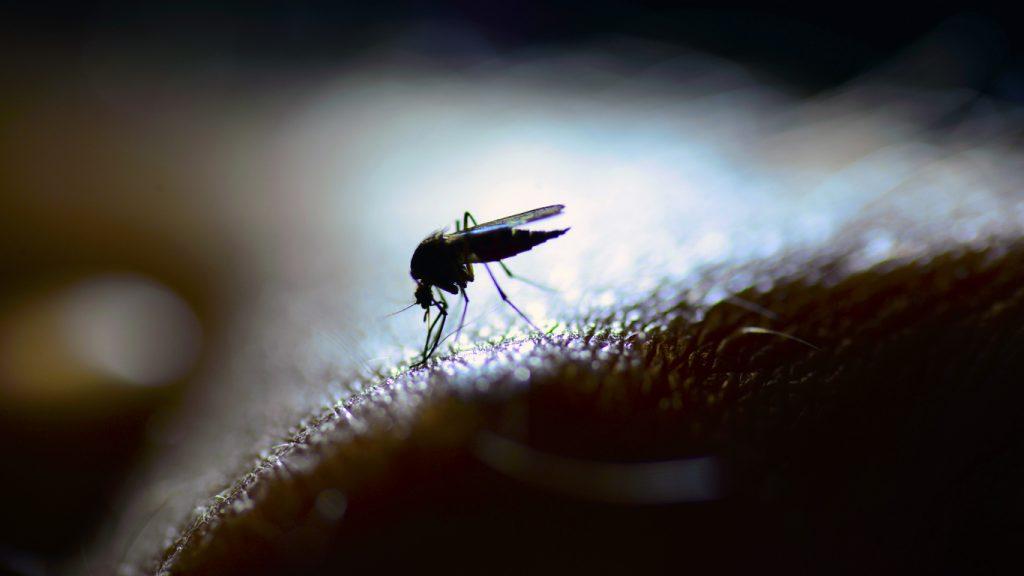 fastidiose zanzare