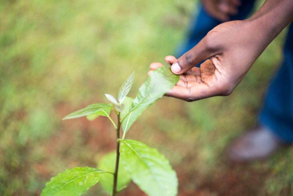Piantare un albero durante le vacanze ecofriendly